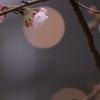 花と月はお友達