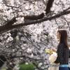 花のような人 ~「来年は平穏な春を」編~