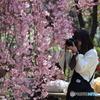 花のような人 ~枝垂れ桜とカメラ女子~