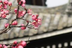 清涼寺で見つけた春