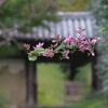 奈良白毫寺 萩の寺