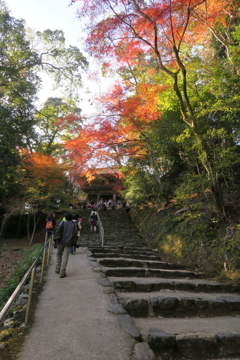 紅葉への石段