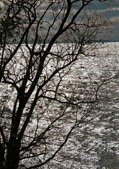 湖畔の景色 其の壱