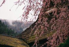 かやぶきの里、春その1
