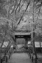 嵐山地蔵院02
