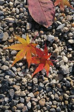 控えめな秋
