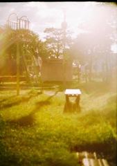 公園逆光開放