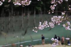 一ノ俣桜公園