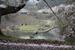 歌野千本桜①