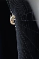 蜘蛛のお家
