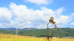 野鳥のいる、とある風景 5
