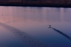 荒川の朝⑦