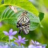 花に蝶(新しい世界)