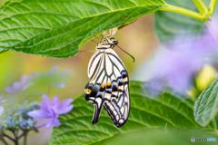花に蝶(新しい世界2)