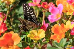 花に蝶(五)至福のひと時