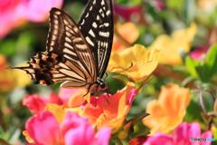 花に蝶(八)地上の楽園