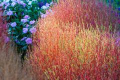 七色に光る草(おとぎの国産)