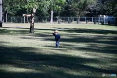ローンパインコアラ園で遊ぶ