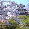 高田公園 城&桜