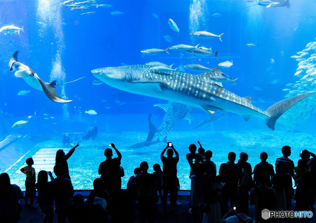 美ら海水族館 マンタとジンベ君