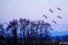 瓢湖の夕暮れ