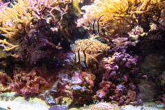 マリンピア日本海 熱帯魚
