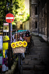 Sunflowers on the bicycle