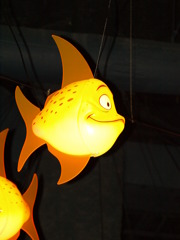 魚 右向き