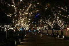 ハーバーランドの街路樹