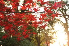 鳩山会館(庭園)