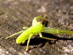 黄緑の蜘蛛