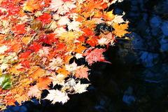 水に落ちる。。。秋