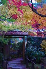 日本の秋。