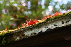 苔むす屋根と紅