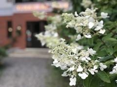 出迎える花