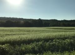 新得 蕎麦畑