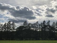 防風林のシルエット