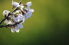 春色に染まる