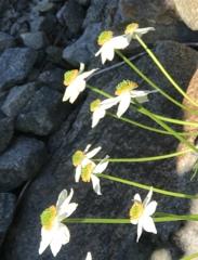 水場に咲く花