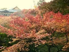 Short trip in Kyoto