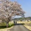 二度見の桜木