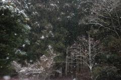 降りやまぬ雪に森は眠りて