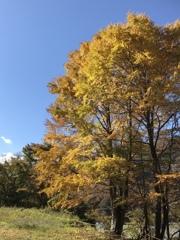 秋晴れ好日