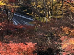 大洞院の秋