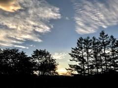 カラマツと西の空