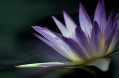 心の花を咲かせよう