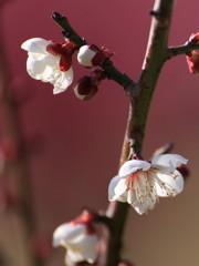 心地よき春の光