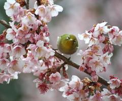 春からの視線