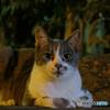 ふたりの好奇心:Finding Nagasaki Cats