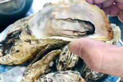 令和三年 初 焼き牡蠣(有明海産)